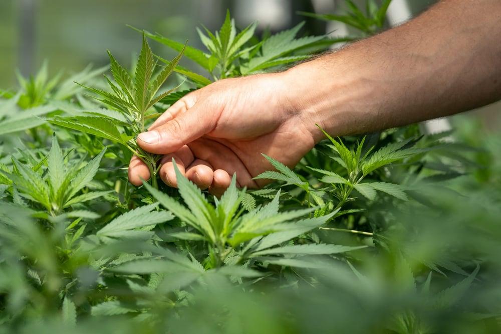 crystalweed-cannabis-F-ZXqLioXxg-unsplash